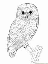 Coloring Adult Owl Printable Owls Pages Getcoloringpages sketch template