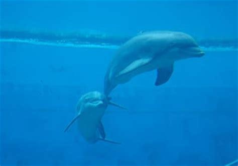 aquarium genua 10 000 qm sch 246 nheit der meere