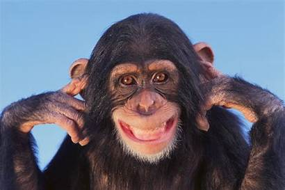 Monkey Face Faces Primates Pulling Funny Human