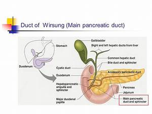THE PANCREAS. - ppt video online download