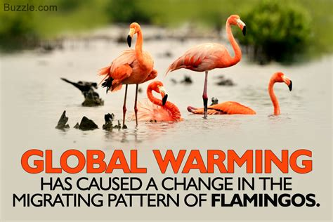 Unexpectedly Bizarre Effects Of Global Warming On Animals