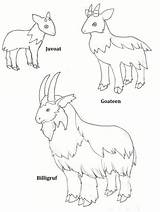 Gruff Billy Goats Coloring Printable Three Colour Activities Goat Troll Clipart Masks Deviantart Activity Clip Pdf Lovely Library Role Draw sketch template