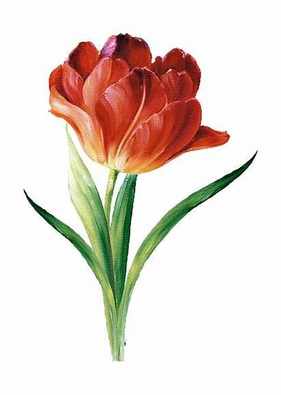 Flower Pencil Colored Lisa Drawings Painting Flowers