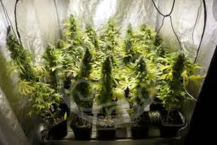chambre de culture fait maison chambre de culture cannabis fait maison cheap culture en