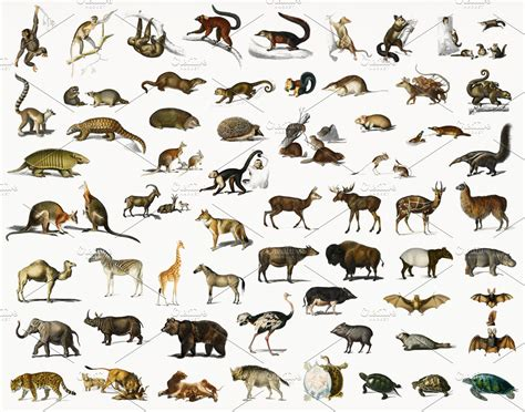 Different types of animals (PSD) High Quality Stock