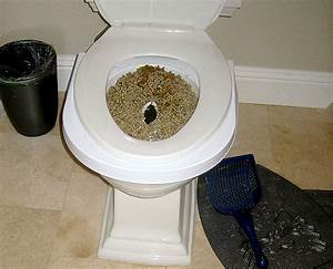 potty training your cat how to help children cope with death With can you train a cat to go outside for bathroom