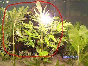 Schimmel In Pflanzen : wer hat erfahrungen mit ikea wasserpflanzen seite 3 aquarium forum ~ Bigdaddyawards.com Haus und Dekorationen