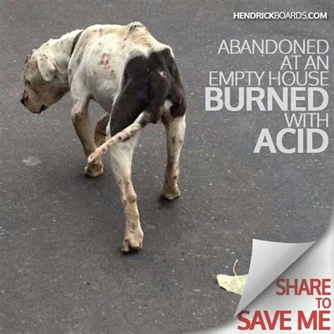 save dogs stop animal cruelty puppies