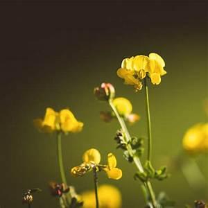 Gelbe Stellen Im Rasen : klee im rasen ursachen beseitigung und vobeugung ~ Markanthonyermac.com Haus und Dekorationen