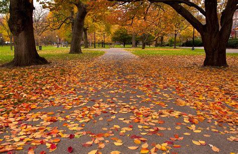 fall foliage  boston fall  boston