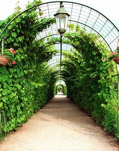 Pflanzen Für Pergola : k sters garten und landschaftsbau neuss pergola und platanen ~ Sanjose-hotels-ca.com Haus und Dekorationen