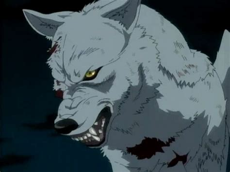 wolf s images kiba wallpaper and background photos