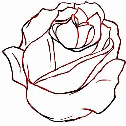 Outline Rose Drawing Clip Clipart Outlines Realistic