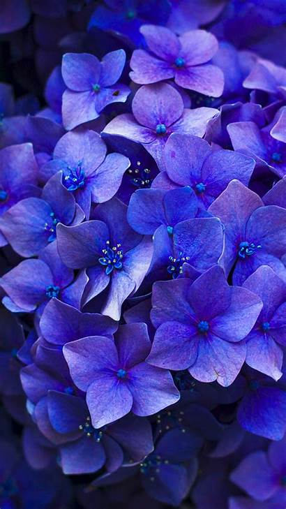 Iphone Wallpapers Spring Floral Plus Sunny Purple