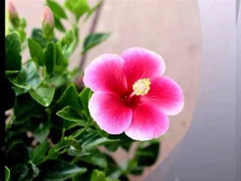 piccolo fiore dove vai i teppisti dei sogni piccolo fiore dove vai