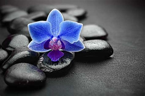 tableau noir pour cuisine tableau fleur zephir izoa