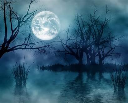 Moon Night Forest Dark Resolution Moonshine Nature