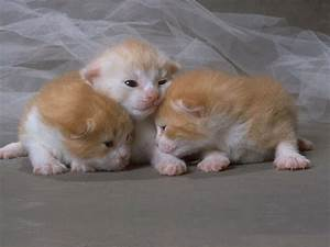 Very cute baby cats top 30 most cutest baby cat | Chainimage