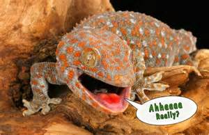 best lizard facts all you need to know cobras org