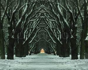 Mystical avenue at winter night   Stock Photo   Colourbox