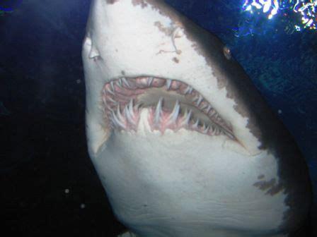 malaysia reisebericht bei den haien