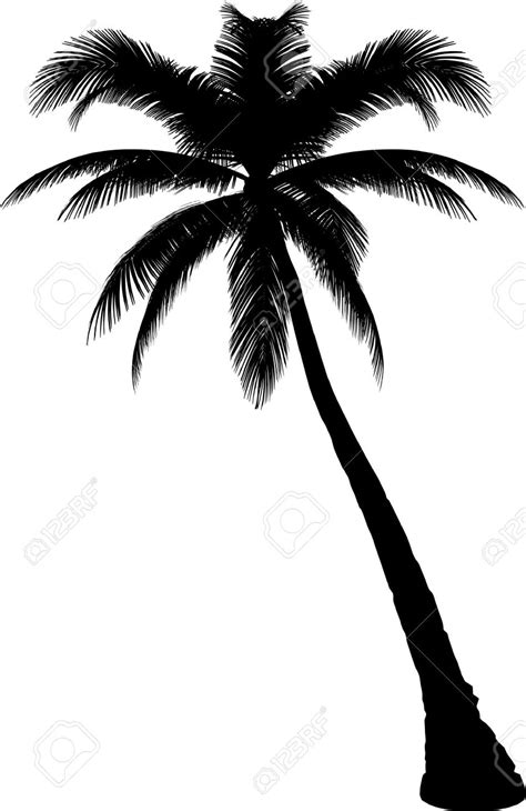 palm tree clipart black and white no background palm tree silhouette vector clipart best
