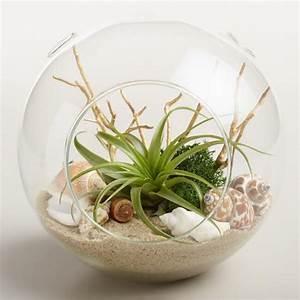 Beach Garden Live Plant Glass Terrarium World Market