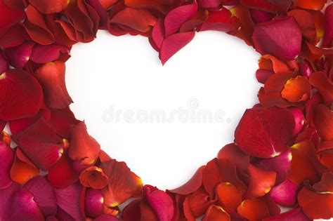 valentine   card stock image image  card