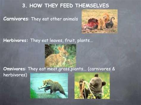 General characteristics of animals YouTube