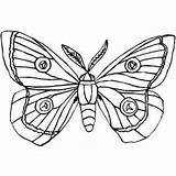 Moth Coloring Butterfly Silk Drawing Insects Printable Colouring Cocoon Moths Butterflies Freeprintablecoloringpages Drawings Getdrawings Designlooter sketch template