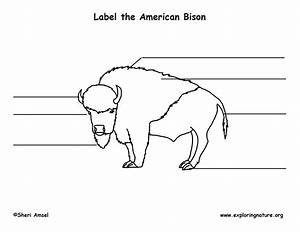 Bison Labeling Page