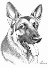 German Shepherd Coloring Pages Shepherds Drawing Dog Puppy Puppies Moon Kaleidoscope 1572 1094 Drawings Template King Amp Sketch Face Rottweiler sketch template