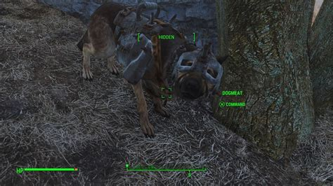 fallout    find  full set  armor  dogmeat
