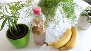 Dünger Selber Machen : pflanzen bio d nger selber machen 3 tipps mit bananenschalen organic fertilizer self ~ Watch28wear.com Haus und Dekorationen
