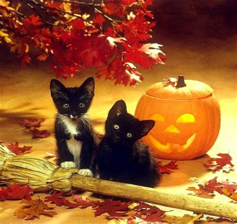 Wallpaper Cat And Pumpkin by Kittens Cats Animals Background