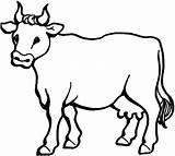 Coloring Cows sketch template