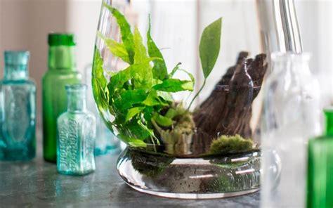 plante aquatique pour aquarium plante aquatique jetez vous 224 l eau en 47 photos archzine fr