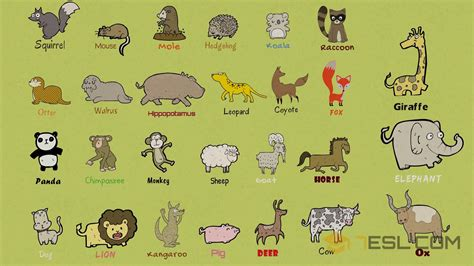 List Of Mammals: Useful Mammal Names With Pictures 7 E S L
