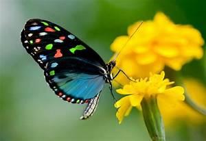 9 cosas sorprendentes sobre las mariposas que no deberías ...