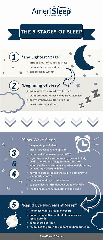Sleep Stages Infographic Amerisleep Diagnostics Uncategorized November