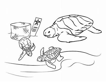 Turtle Coloring Pages Sea Printable Tortoise Sheets
