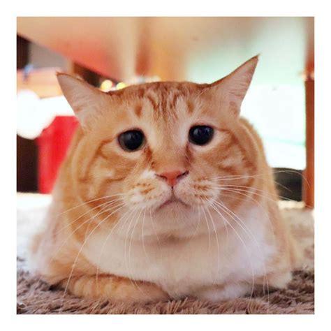 Foto kartun lucu updated their profile picture. Foto Profil Gambar Kucing Lucu - 81021+ Nama Untuk Kucing ...