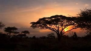 Serengeti, National, Park, Wallpapers