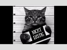 Lustige Katzen zum Totlachen Lustige Katzentagebuch vol