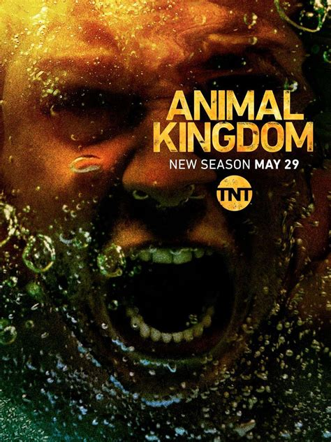 reparto animal kingdom temporada  sensacinecom