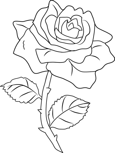 It is the rose bush, the genus rosa and the family rosaceae. Pretty Rose Coloring Page - Free Clip Art