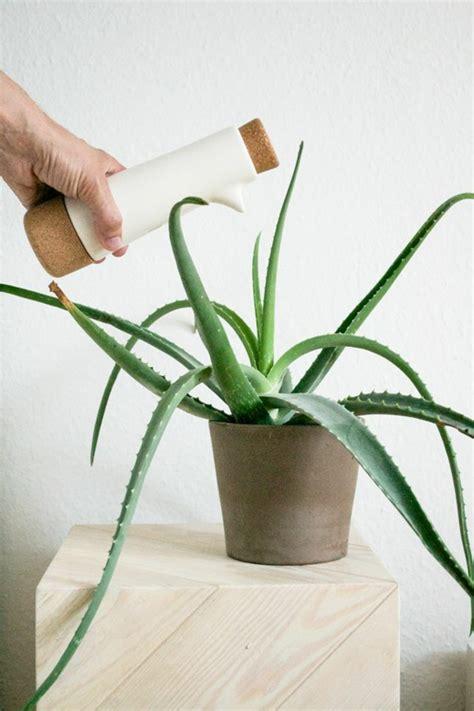 zimmergr 252 npflanzen bilder und inspirierende deko ideen