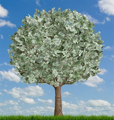 Images Of Money Tree Armedlaughing Money Tree
