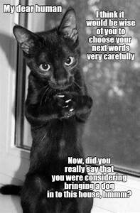 Pur, Chance, It, Be, Wise, To, Reconsider, -, Lolcats