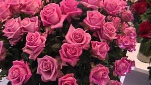 Fresh Rose Variety  U0026quot Soulmate U0026quot  - Fresh Pink Roses